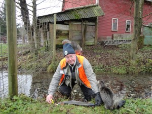 Volunteer Chris Brown getting some technical help on Parson Creek (Photo by Sheila Tomas)