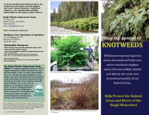 Knotweed_brouchure_Skagitreprint_printwise_pg1