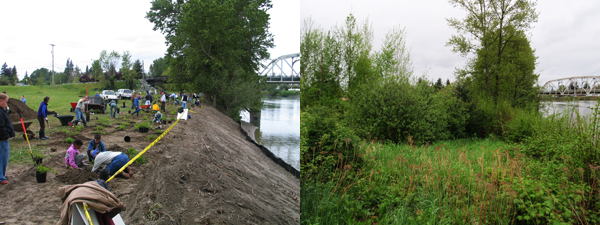 Restoration along the Skagit River before and after - 2005 to 2012