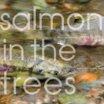 Salmon in the Trees -- front cover of book By Amy Gulick Published by Braided River, imprint of Mountaineers Books www.braidedriver.org